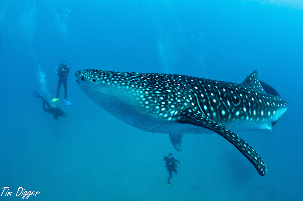 cebu_diving