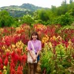 【Sirao Flower Farm】知っていますか?セブには綺麗なお花畑があるんです!!