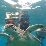 野生のウミガメと一緒に泳げる!フィリピンの秘境【Apo Island】(アポ島)をご紹介!